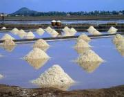 Salt Manufacturing - Kep
