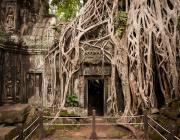 Ta Prohm Temple (Tomb Raider) - Siem Reap